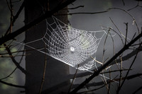 Web in the Sun - Slovenia
